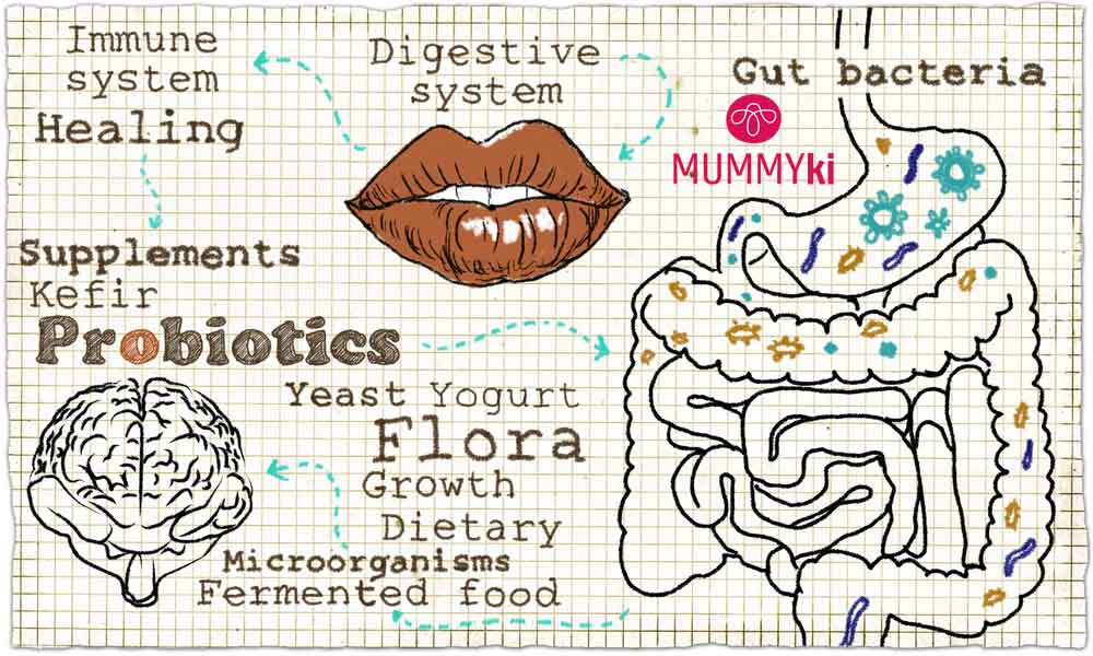 Illustration about the Digestive System